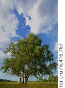 Березы на фоне голубого неба. Стоковое фото, фотограф Анфимов Леонид / Фотобанк Лори