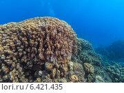 Подводная жизнь Красного моря. Стоковое фото, фотограф Станислав Мороз / Фотобанк Лори