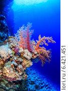 Кораллы на дне Красного моря. Стоковое фото, фотограф Станислав Мороз / Фотобанк Лори