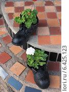Купить «Клумба своими руками -цветы в ботинках», фото № 6425123, снято 7 сентября 2014 г. (c) Елена Петухова / Фотобанк Лори