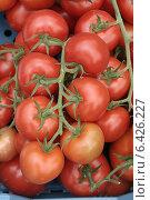 Гроздь помидоров. Стоковое фото, фотограф vansant natalia / Фотобанк Лори
