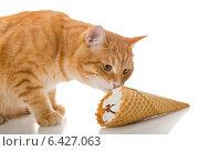 Купить «Рыжий кот нюхает вафельный рожок мороженого», фото № 6427063, снято 13 сентября 2014 г. (c) Okssi / Фотобанк Лори