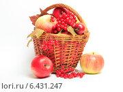 Купить «Корзиночка с яблоками и красной калиной на белом фоне», эксклюзивное фото № 6431247, снято 23 сентября 2014 г. (c) Яна Королёва / Фотобанк Лори