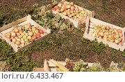 Осенний натюрморт из яблок. Стоковое фото, фотограф Степанова М Е / Фотобанк Лори