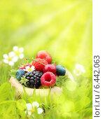 Купить «Ягоды в траве», фото № 6442063, снято 7 июня 2014 г. (c) Валентина Разумова / Фотобанк Лори