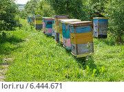 Купить «Разноцветные пчелиные ульи», эксклюзивное фото № 6444671, снято 26 июля 2014 г. (c) Елена Коромыслова / Фотобанк Лори