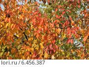 Купить «Красивый яркий фон из мелких осенних листочков», эксклюзивное фото № 6456387, снято 27 сентября 2014 г. (c) lana1501 / Фотобанк Лори
