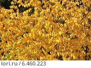 Купить «Красивый яркий фон из мелких осенних желтых листочков», эксклюзивное фото № 6460223, снято 26 сентября 2014 г. (c) lana1501 / Фотобанк Лори