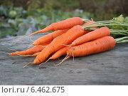 Морковь, которая лежит на столе, на фоне сельскохозяйства. Стоковое фото, фотограф Иван Корчагин / Фотобанк Лори