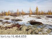 Купить «Первый снег в ямальской тундре прикрывший осеннюю листву», фото № 6464659, снято 28 сентября 2014 г. (c) Михаил Рыбачек / Фотобанк Лори