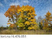 Купить «Осенний пейзаж с кленами», эксклюзивное фото № 6476051, снято 2 октября 2014 г. (c) Елена Коромыслова / Фотобанк Лори