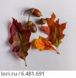 Осенний мотив. Стоковое фото, фотограф Евгений Питомец / Фотобанк Лори