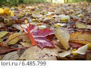 Дорожка из влажных опавших листьев. Стоковое фото, фотограф Татьяна Потехина / Фотобанк Лори