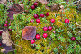 Клюква растет на болоте, фото № 6489807, снято 5 октября 2014 г. (c) Наталья Осипова / Фотобанк Лори