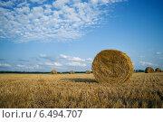 Осеннее поле. Стоковое фото, фотограф Ксения Ларкина / Фотобанк Лори