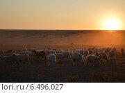 Стадо баранов на фоне заката. Стоковое фото, фотограф Яна Зайцева / Фотобанк Лори