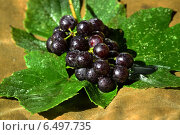 Виноград изабелла ( Vitis labrusca ) Стоковое фото, фотограф Roman.melnikeysk / Фотобанк Лори