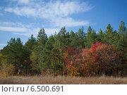 Осенний лес. Стоковое фото, фотограф Ксения Ларкина / Фотобанк Лори