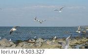Купить «Стая чаек кружится над берегом Балтийского моря», видеоролик № 6503327, снято 5 октября 2014 г. (c) Сергей Трофименко / Фотобанк Лори