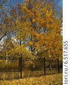 Купить «Деревья за оградой парка осенью в Москве», фото № 6517655, снято 11 октября 2014 г. (c) Самойлова Екатерина / Фотобанк Лори