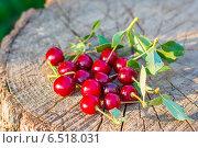 Горсть ягод вишни с листьями лежит на срезе дерева. Стоковое фото, фотограф Елена Руй / Фотобанк Лори