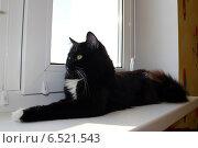 Купить «Кот лежит на подоконнике», фото № 6521543, снято 30 марта 2014 г. (c) Александр Птах / Фотобанк Лори