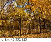 Купить «Золотая осени за оградой парка», фото № 6532923, снято 11 октября 2014 г. (c) Самойлова Екатерина / Фотобанк Лори