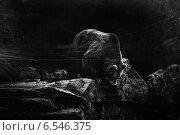 Медведь. Стоковое фото, фотограф Андрей Гашев / Фотобанк Лори