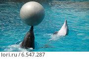 Дельфины играют с мячом. Стоковое фото, фотограф Анатолий Киренков / Фотобанк Лори