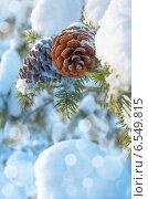 Купить «Шишки на заснеженном дереве», фото № 6549815, снято 30 января 2014 г. (c) Икан Леонид / Фотобанк Лори