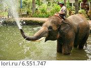 Купить «Купание слона в Парке Таро на Бали», фото № 6551747, снято 30 октября 2007 г. (c) Морозова Татьяна / Фотобанк Лори