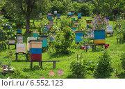 Купить «Пасека в предгорьях Кавказа», фото № 6552123, снято 26 июня 2014 г. (c) Вячеслав Палес / Фотобанк Лори