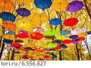 Осенние зонтики в небе. Стоковое фото, фотограф Oleksii Pyltsyn / Фотобанк Лори