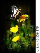 Махаон. Стоковое фото, фотограф Раушания Аппакова / Фотобанк Лори