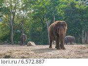 Слон в зоопарке (2014 год). Стоковое фото, фотограф Анастасия Улитко / Фотобанк Лори