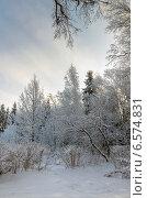 Зимний лес в январе в Подмосковье. Стоковое фото, фотограф Валерий Боярский / Фотобанк Лори