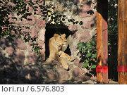 Купить «Львица в Московском зоопарке», эксклюзивное фото № 6576803, снято 28 сентября 2014 г. (c) lana1501 / Фотобанк Лори