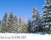 Купить «Подмосковье, зимний лес», эксклюзивное фото № 6578107, снято 28 февраля 2013 г. (c) Татьяна Юни / Фотобанк Лори