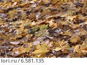 Снег на опавших листьях. Стоковое фото, фотограф Татьяна Ломакина / Фотобанк Лори