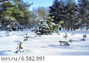 Купить «Маленькие сосны на заснеженной поляне в зимнем парке», фото № 6582991, снято 20 февраля 2012 г. (c) Михаил Марковский / Фотобанк Лори