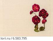 Открытка –композиция из сухих цветов с местом для текста на льняной салфетке. Стоковое фото, фотограф Marina Kutukova / Фотобанк Лори