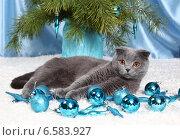 Купить «Красивый британский кот и новогодние игрушки», фото № 6583927, снято 15 декабря 2012 г. (c) Останина Екатерина / Фотобанк Лори