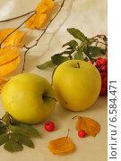 Осенние яблоки. Стоковое фото, фотограф Репаная Екатерина / Фотобанк Лори