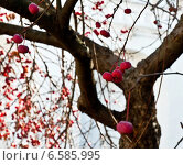Купить «Ягоды боярышника», фото № 6585995, снято 26 октября 2014 г. (c) Дарья Филин / Фотобанк Лори