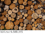 Купить «Поленница. Стопка аккуратно сложенных дров», фото № 6588315, снято 4 сентября 2014 г. (c) Литвяк Игорь / Фотобанк Лори