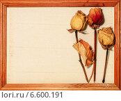 Открытка - композиция из цветов засушенной розы  на светлой льняной салфетке  с местом для текста в деревянной рамке. Стоковое фото, фотограф Marina Kutukova / Фотобанк Лори
