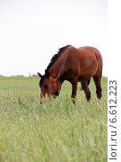 Купить «Лошадь», фото № 6612223, снято 10 июня 2014 г. (c) Руслан Шакуров / Фотобанк Лори