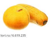 Купить «Овощи семейства тыквенных», фото № 6619235, снято 3 ноября 2014 г. (c) Игорь Веснинов / Фотобанк Лори