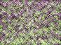 Цифровое безумие, абстрактный фон, иллюстрация № 6621003 (c) Веснинов Янис / Фотобанк Лори