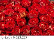 Огромный букет красных роз. Стоковое фото, фотограф Ольга Сейфутдинова / Фотобанк Лори